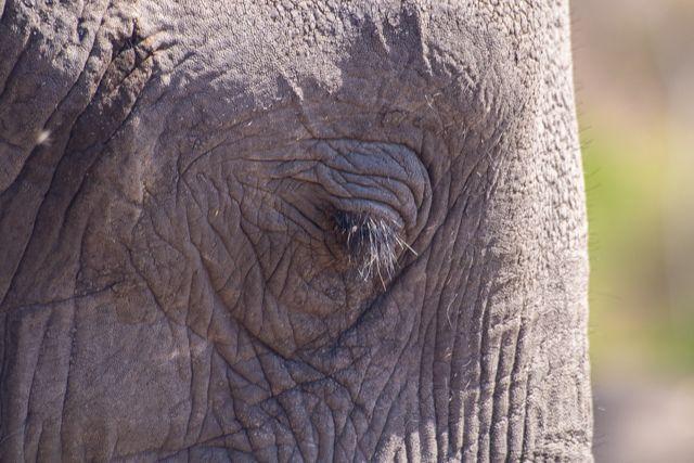 parque nacional chobe botswana (16)