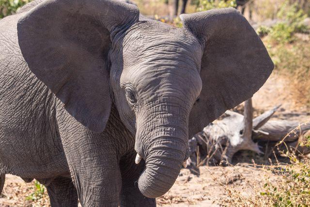parque nacional chobe botswana (17)