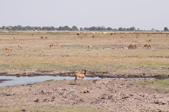 parque nacional chobe botswana (18)