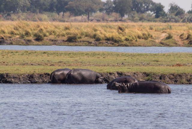 parque nacional chobe botswana (19)