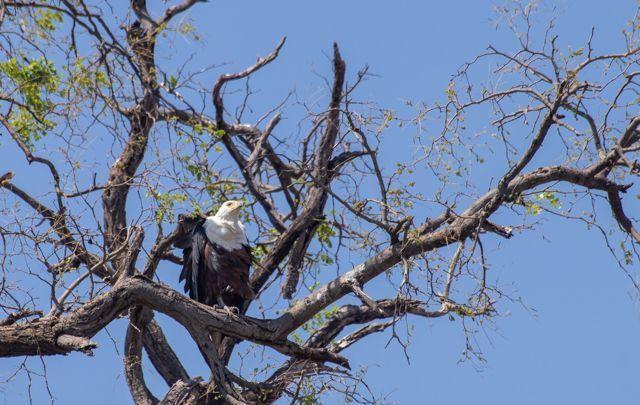 parque nacional chobe botswana (20)