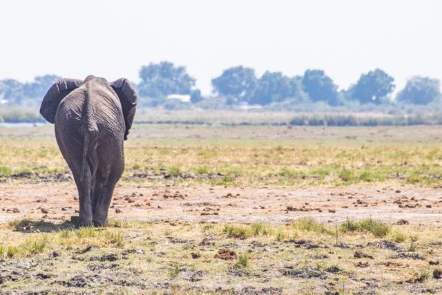 parque nacional chobe botswana (22)