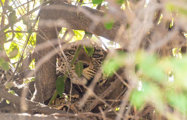 parque nacional chobe botswana (23)