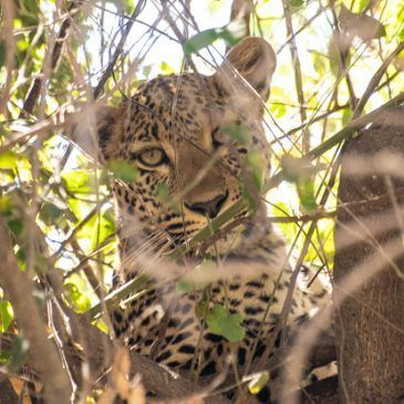 Parque Nacional de Chobe (Botswana)