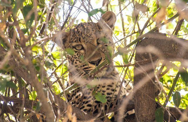 parque nacional chobe botswana (24)