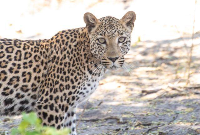 parque nacional chobe botswana (25)