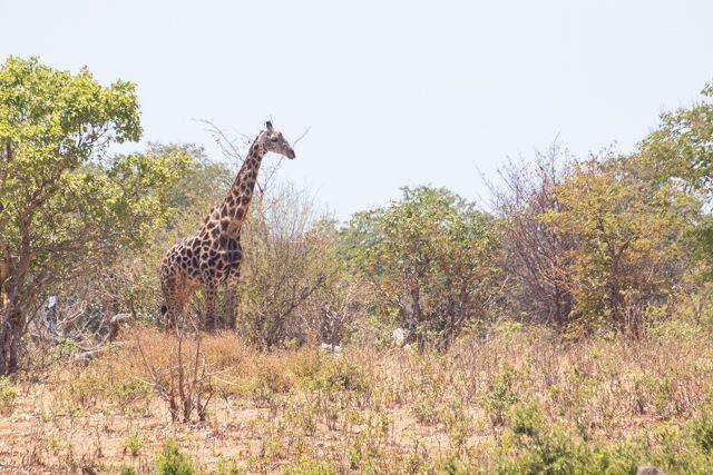 parque nacional chobe botswana (27)