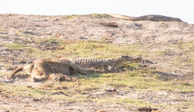 parque nacional chobe botswana (39)