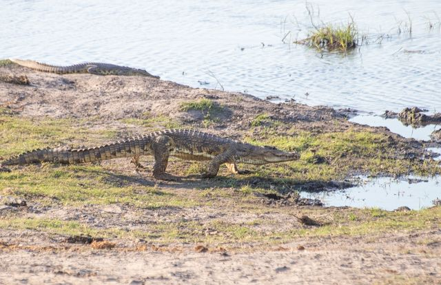 parque nacional chobe botswana (40)