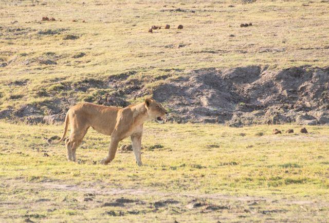 parque nacional chobe botswana (41)