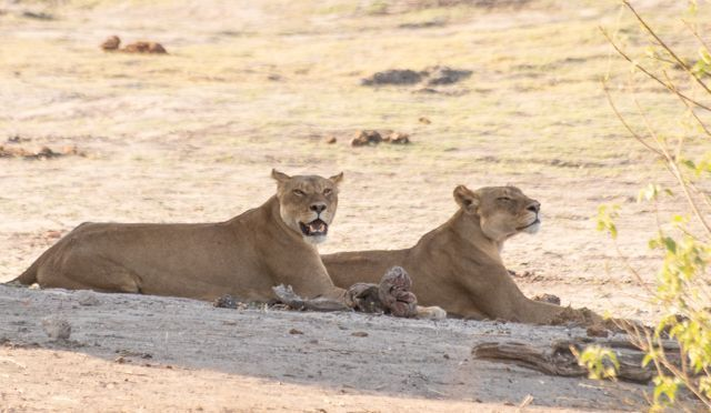 parque nacional chobe botswana (42)