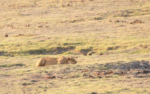 parque nacional chobe botswana (44)