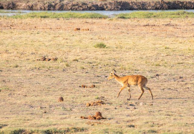 parque nacional chobe botswana (45)