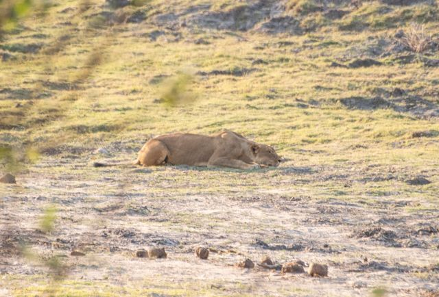 parque nacional chobe botswana (46)
