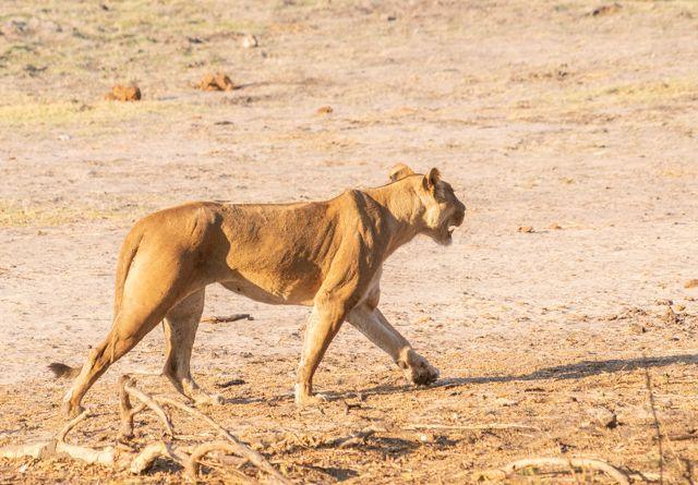 parque nacional chobe botswana (47)