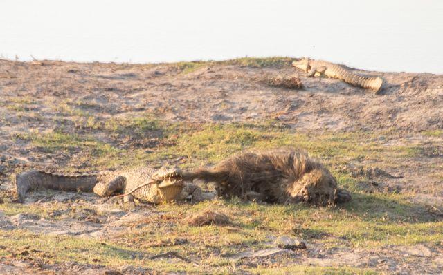parque nacional chobe botswana (49)