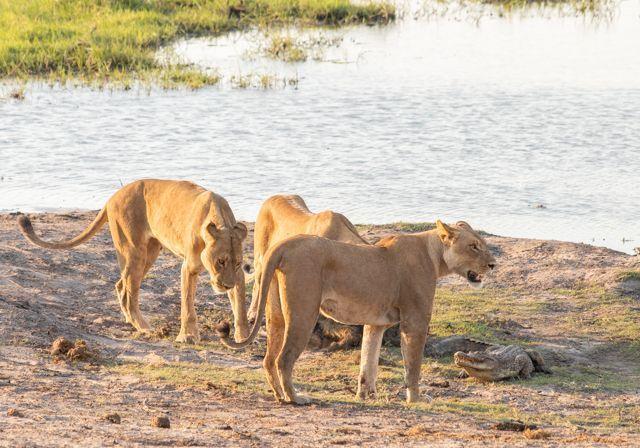 parque nacional chobe botswana (51)