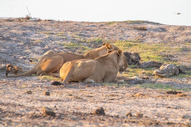 parque nacional chobe botswana (52)