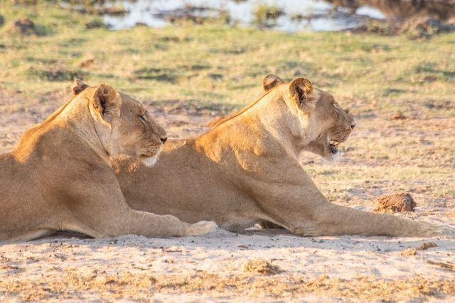 parque nacional chobe botswana (53)