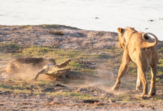 parque nacional chobe botswana (55)