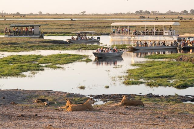 parque nacional chobe botswana (56)