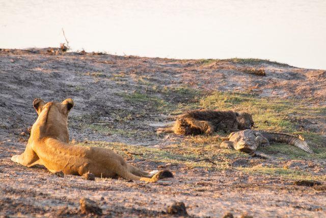 parque nacional chobe botswana (57)