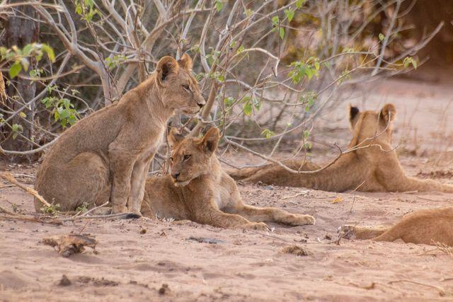 parque nacional chobe botswana (58)
