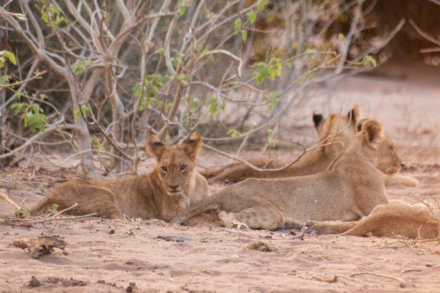 parque nacional chobe botswana (59)