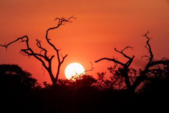 parque nacional chobe botswana (61)