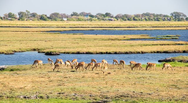 parque nacional chobe botswana (7)