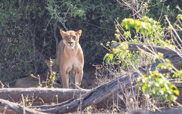 parque nacional chobe botswana (8)