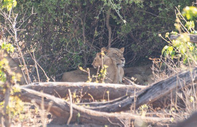 parque nacional chobe botswana (9)