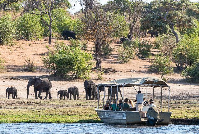 safari en barco por la ribera del chobe botswana (10)