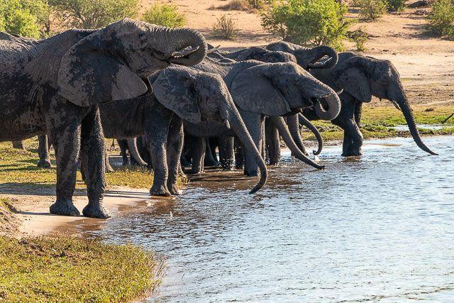 safari en barco por la ribera del chobe botswana (12)