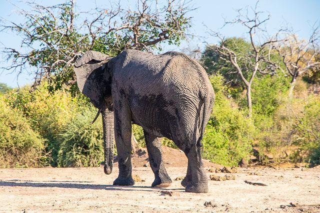 safari en barco por la ribera del chobe botswana (13)