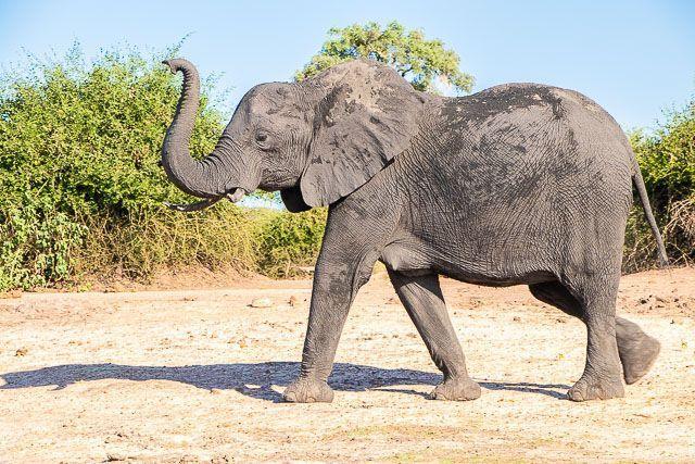 safari en barco por la ribera del chobe botswana (14)