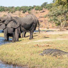 Safari en barco por la ribera del Chobe (Botswana)
