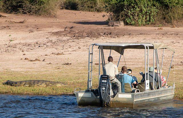safari en barco por la ribera del chobe botswana (17)