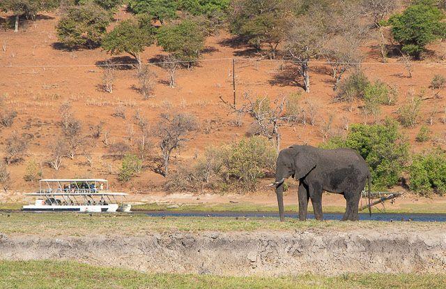 safari en barco por la ribera del chobe botswana (18)