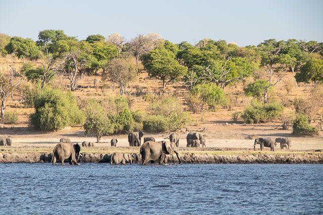 safari en barco por la ribera del chobe botswana (19)