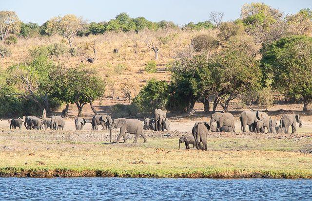 safari en barco por la ribera del chobe botswana (20)