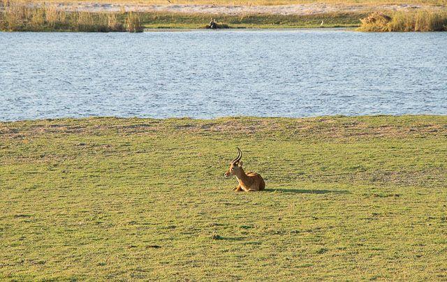 safari en barco por la ribera del chobe botswana (24)