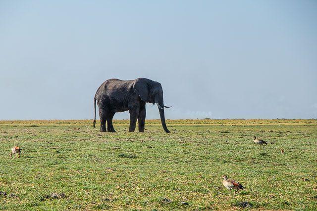 safari en barco por la ribera del chobe botswana (9)