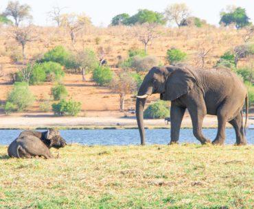 safari por la ribera del chobe botswana