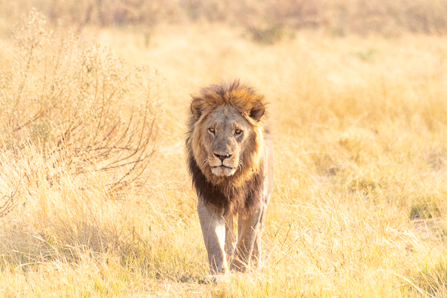 el canal de savuti parque nacional chobe botswana (12)