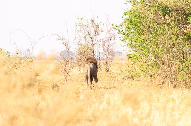 el canal de savuti parque nacional chobe botswana (13)