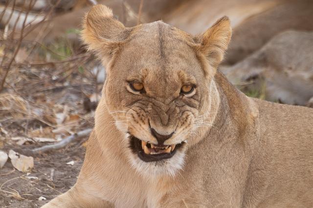 el canal de savuti parque nacional chobe botswana (16)
