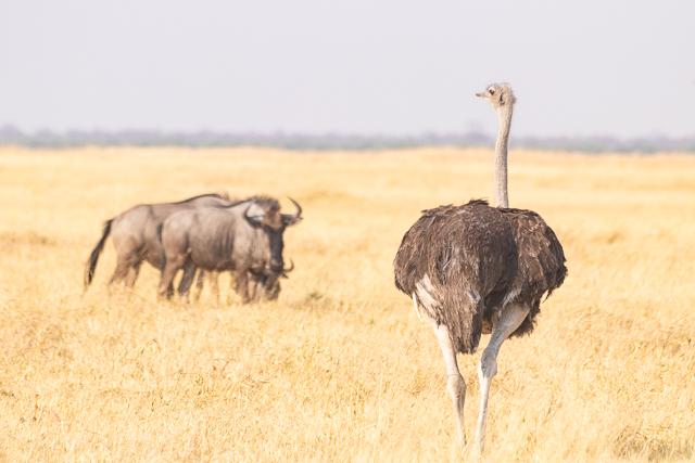 el canal de savuti parque nacional chobe botswana (19)