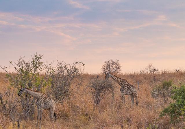 el canal de savuti parque nacional chobe botswana (2)