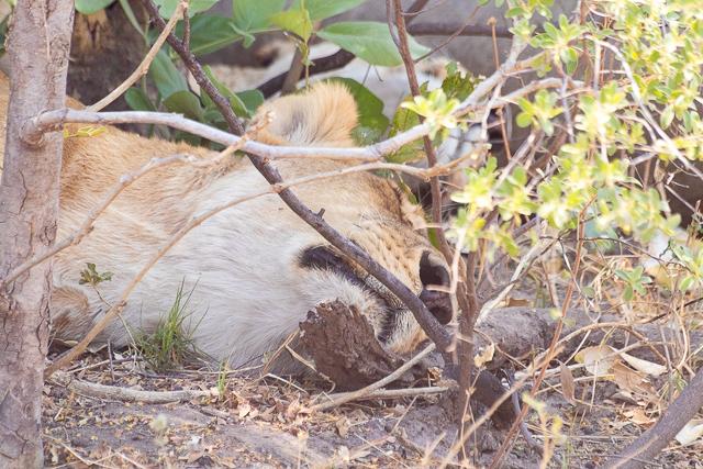 el canal de savuti parque nacional chobe botswana (23)